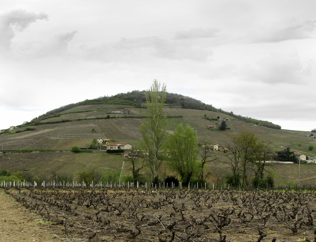 Mont Brouilly saisons - Printemps